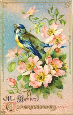 Vintage bluebird image