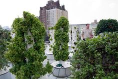 Green Vertical farm rooftop