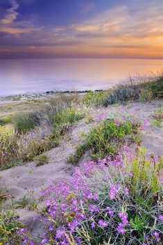 """Sunset at the beach Flowers on the sand"" Photograph - Fine Art Print - Guido Montanes Castillo"