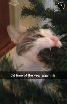 Time of that year again! Funny cat and Christmas tree