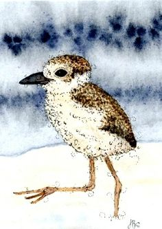 Wilson's Plover chick - watercolour - by Jean Bonnitcha
