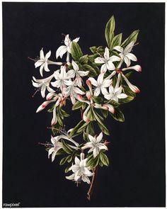 Flower Bomb Rijksmuseum Floral poster prints by Fine Art Flower Prints, Flower Art, Watercolor Flowers, Watercolor Paintings, Watercolour, Poster Prints, Art Prints, Free Illustrations, Print Pictures