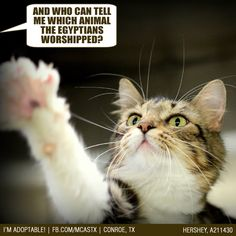 And they'll never let us forget it, LOL! #cats #funny