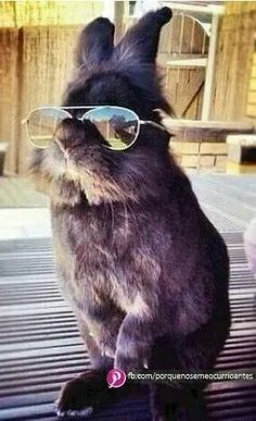 Funny Bunnies, Baby Bunnies, Cute Bunny, Adorable Bunnies, Funny Rabbit, Cute Creatures, Beautiful Creatures, Animals Beautiful, Cute Baby Animals