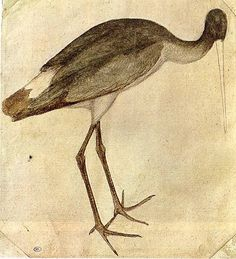 Stork drawing by Pisanello