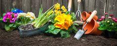 Dicas simples: como deixar a terra do vaso (ou canteiro) fofinha - Olá, pessoal! Semana passada, falamos sobre como preparar a terra para fazer o plantio/transplante e a adubação e hoje vamos dar algumas dicas bem simples que melhoram a qualidade física do solo da nossa horta já estabelecida.  Se quando você rega a água escoa para fora do vaso ou demora muito ... - http://www.ecofertilizante.com/ecoblog/2014/11/15/dicas-simples-como-deixar-a-terra-do-vaso-ou-canteiro