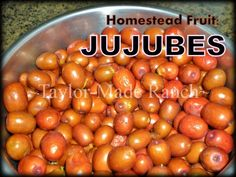 When Wondering What This Mysterious Fruit From An Abandoned Homestead, The Extension Agents ID'd As Jujube See How I preserved Them & How I use Them. #TaylorMadeRanch