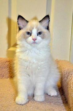Cinda Cat   Pawshake