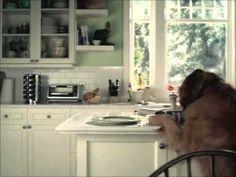PERRO acusa al gato de comerse sandwich - YouTube
