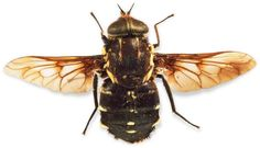Looking to learn more about different types of insect? Improve your knowledge on insects and find out more about invertebrates with DK Find Out for kids. Insect Wings, Types Of Insects, Penguins, Bee, Honey Bees, Penguin, Bees