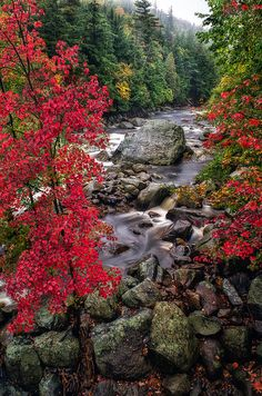 Ausable River by Mark Papke. Click on the picture for prints.