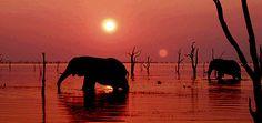 Elephants at sunset - Kariba Zimbabwe