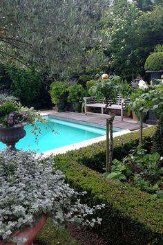 Love the shrubs by the edge of the pool