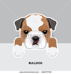 Vector Illustration Portrait of Bulldog Puppy. Dog isolated