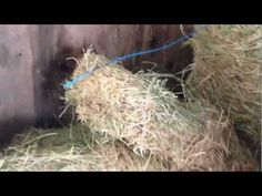 Can a Horse Eat Grass Clippings? Why Tear Apart Your Hay Flakes? Rick Go...