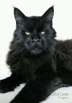 čierna XX mačička Incredibles porno komické