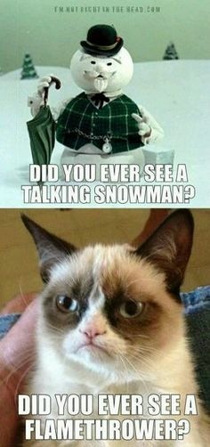 Cat Grumpy Cat Quotes Titanic Cat Grumpy Cat Quotes