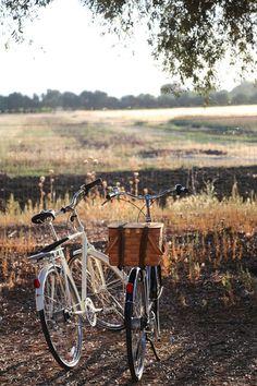 Bike rides on summer mornings