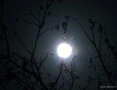 Met maanlicht en een donkere lucht zie je de nacht