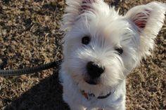 <3 Woozie dog