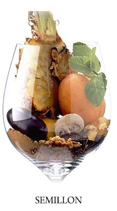 Sémillon,donne des vins de qualité exceptionnelle à Sauternes et Barsac ou il est assemblé de 4/1 à du Sauvignon blanc additionnée au muscadelle.Peau fine rend le Sémillon vulnérable au Botrytis,donne des raisins concentrés.Présent en Australie à Hunter valley ou il donne de blancs Secs arômes minéraux.