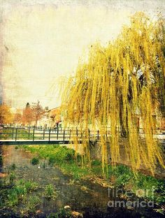 """""""The Willow"""" by ioanna papanikolaou [by-jwp] on fineartamerica.com   the tree series   nature grunge photography"""