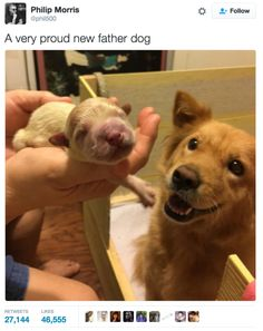 A very proud new father dog #Cute