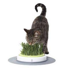 Catit Design Senses Grass Garden 50755