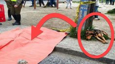 Dog Sat On The Road Beside A Pink Tarpaulin. When They Learned Why? I Cried