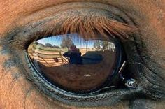 is there anything more soulful than the eye of a horse?