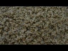 Hodowla ślimaków - SNAILS GARDEN - podrostki.