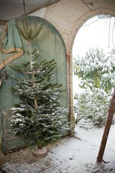 ♕ beautiful little Christmas tree ~ photo by Christina Wilson