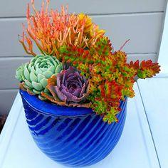 Colorful succulent arrangement by Nathan Brooke Corpus