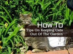How To Tips On Keeping Cats Out Of The Garden