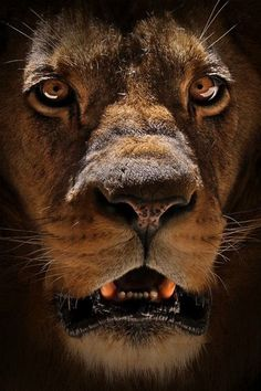 """'My God hath sent his angel, and hath shut the lions' mouths....""""  (Daniel 6:22 KJV) The awesome God of Daniel is my God too!"""