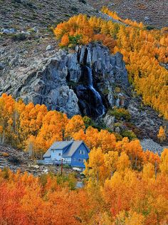 Amazing fall colour of aspen trees captured in this photo taken at Bishop Creek, California.