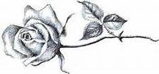 Single Rose Tattoo Drawing - Bing images