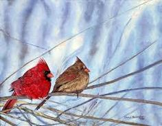 pictures of cardinals - Google Search