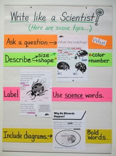science writing anchor chart - love this! We see so many math and language arts anchor charts (which is great), and I love this science one! 7th Grade Science, Elementary Science, Middle School Science, Science Classroom, Science Fair, Life Science, Science Anchor Charts 5th Grade, Stem High School, Teaching 5th Grade