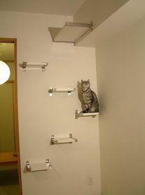 Newlyweds Next Door: Chic Cat Decor