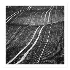 "Saatchi Art Artist Beata Podwysocka; Photography, ""Corduroy Fields - Limited Edition 1 of 10"" #art"