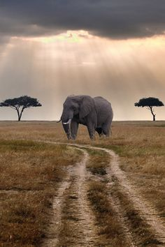 an elephant in rays of sunshine