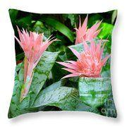 Throw Pillow - Bromelaid Garden A3317 Throw Pillow by Mas Art Studio, #Throw #Pillow  #Garden #Pink #Green #Bromelaid  #Flowers