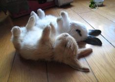 Sleeping bunnies!!!