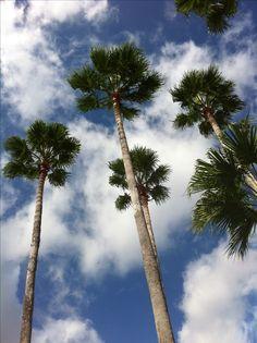 Miami, FL sun putty #sunputty ewg skin deep rated a #1 natural safe sunscreen www.sunputty.com