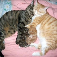 Omg. Happy family!  aaawww!
