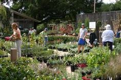 2014 Annual Fall Native Plant Sale at Santa Barbara Botanic Garden: September 27 to November 2, 2014!