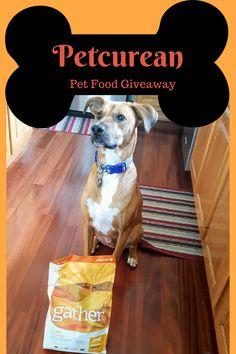 Ten Winter Weather Tips for Your Pets #NourishForLife #Petcurean via @moneysavingparent