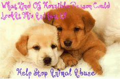stop animal abuse! | Against Animal Cruelty! Stop Animal Abuse