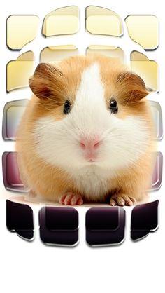 Guinea pig iPod background
